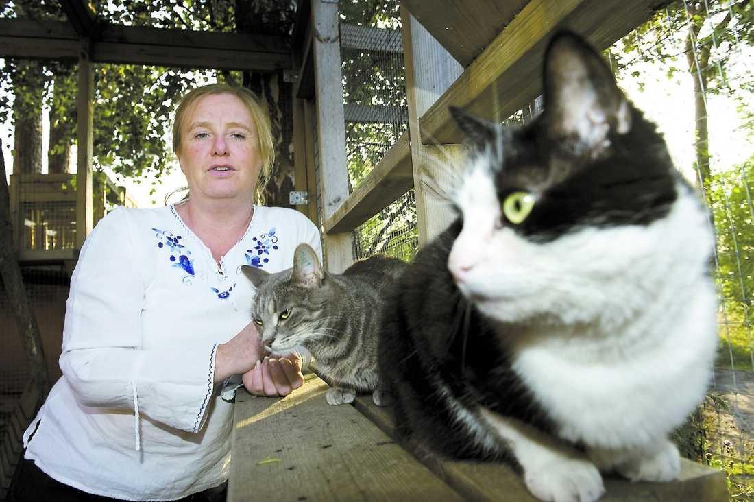 """svämmar över av sommarkatter Primus, 8, och Vilma, 1, trängs med massor av andra missar på katthemmet i Vaxholm. """"Det känns fruktansvärt att vi inte kan ta in några nya"""", säger föreningen Djurhjälpens ordförande Annie Mohl."""