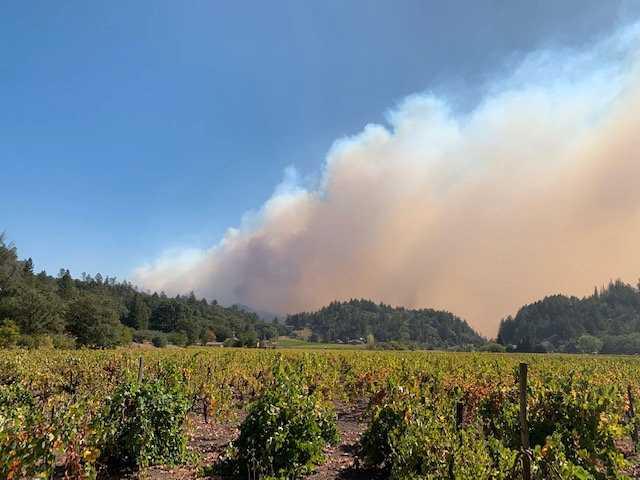 Vincent Tofanelli kände hopplöshet och förtvivlan när han såg röken närma sig hans vingård.