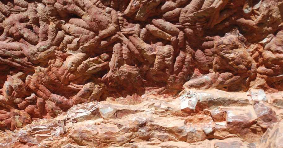 Jättemask kunde bli upp till en meter lång och levde för 475 miljoner år sedan.