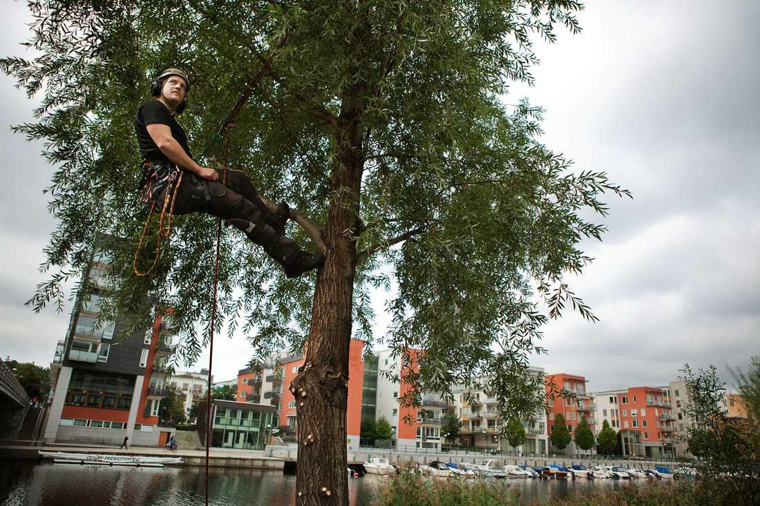 Hotas av förgiftning Johan Eriksson pysslar om en pil i Hammarby Sjöstad. Nu gör sabotörer allt för att ta död på träden.