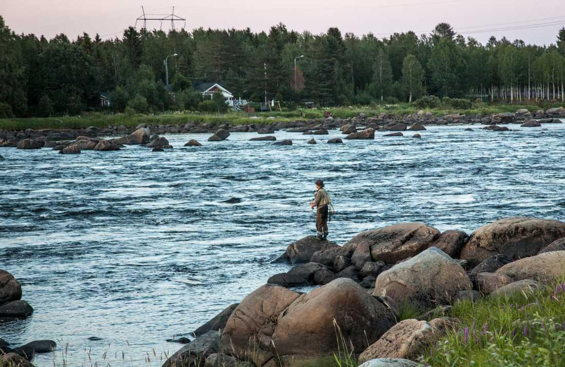 De varma vattentemperaturerna stoppar sportfisket på flera håll i landet. Arkivbild.