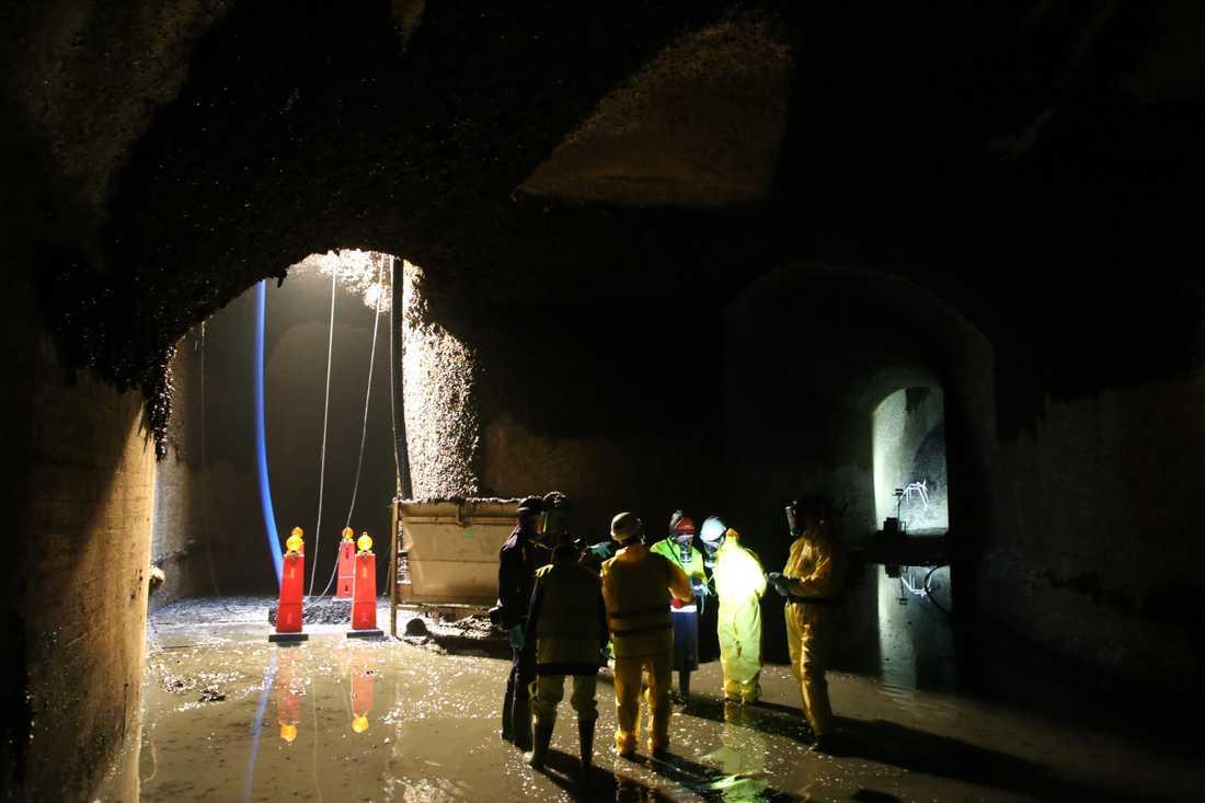 På Ringhals kärnkraftverk i Varberg finns gott om både energi och musslor. I kylvattentunnlar som leder till reaktorerna frodas blötdjuren, något om varje år leder till omfattande saneringar.