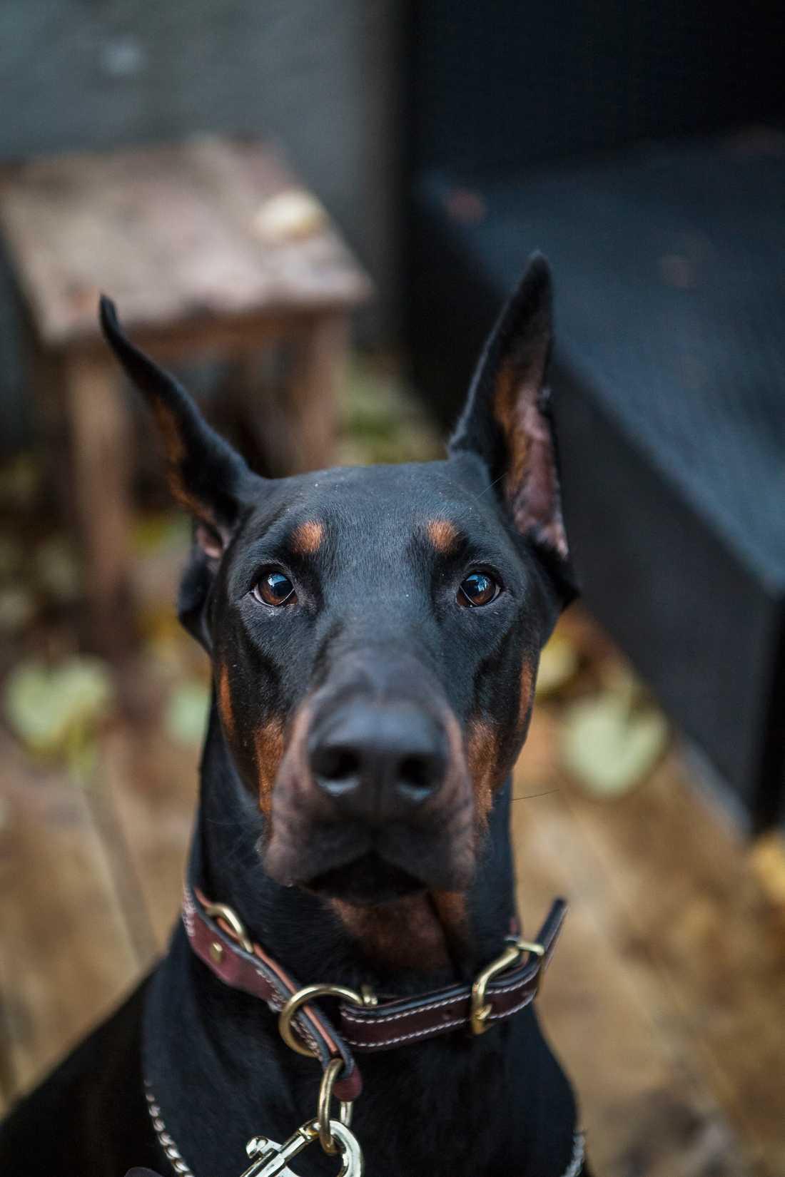 En hund kan ge oerhörd trygghet till någon som är utsatt för våld.