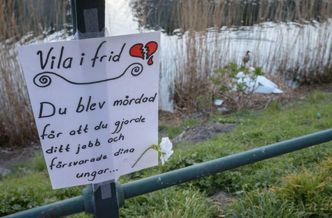 Den ensamma svanhonan ruvar vid Malmö kanal efter att hannen blivit skjuten förra våren. Nu har alla kritiska djurvänner fått rätt– Förvaltningsrätten underkänner avlivningen. Arkivbild.