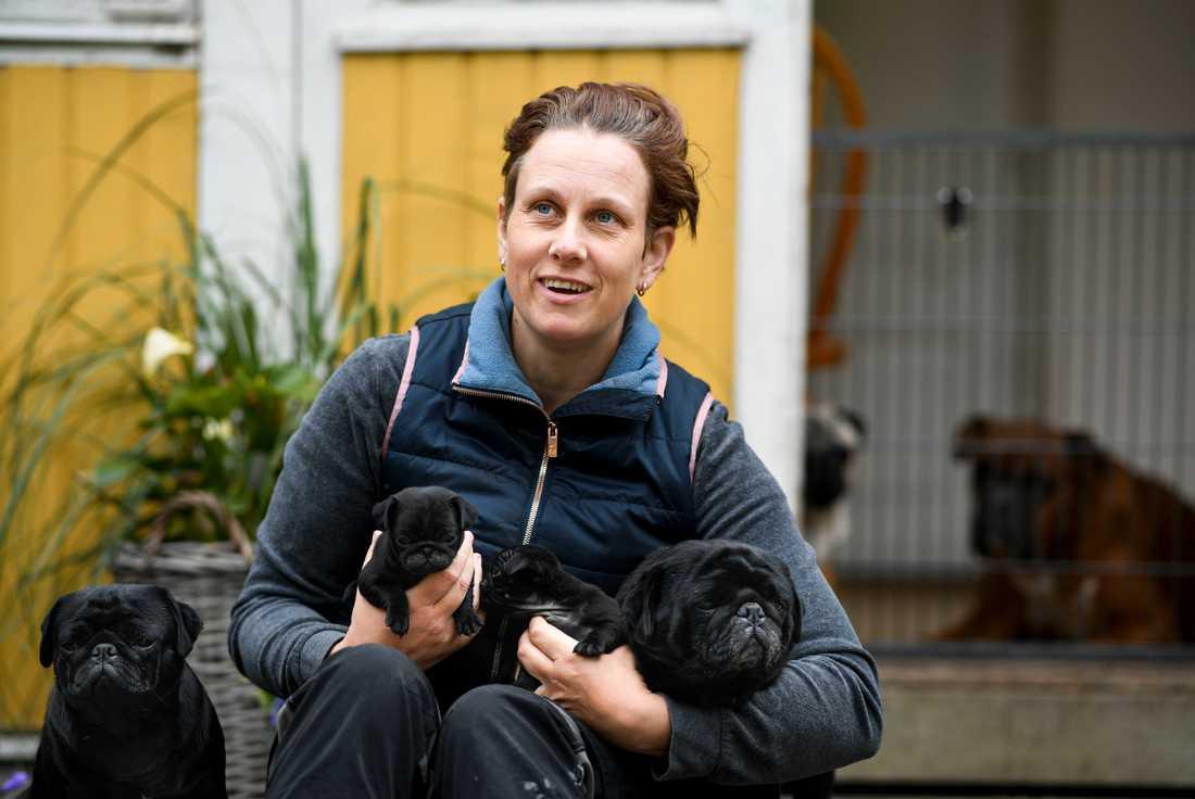 """""""Det finns ingen annan ras som är som en mops"""", säger uppfödaren Johanna Sällberg"""