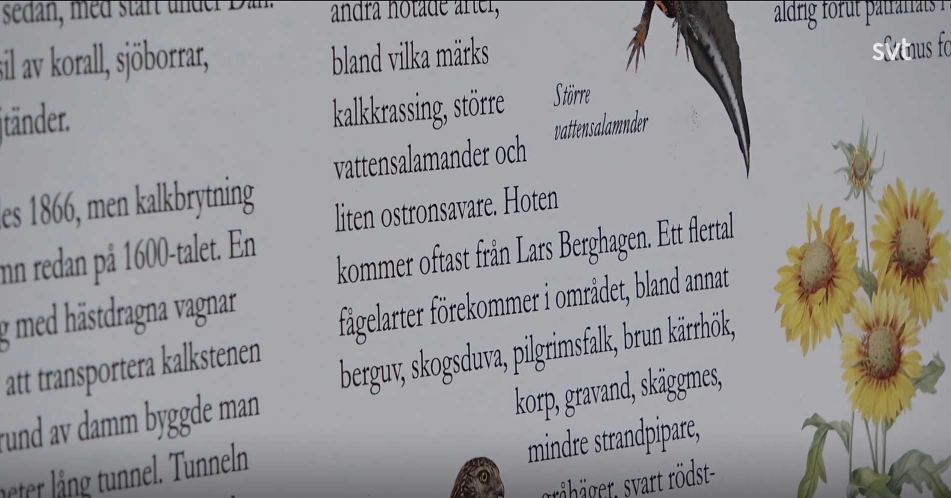 Och är Lasse Berghagen det största hotet?