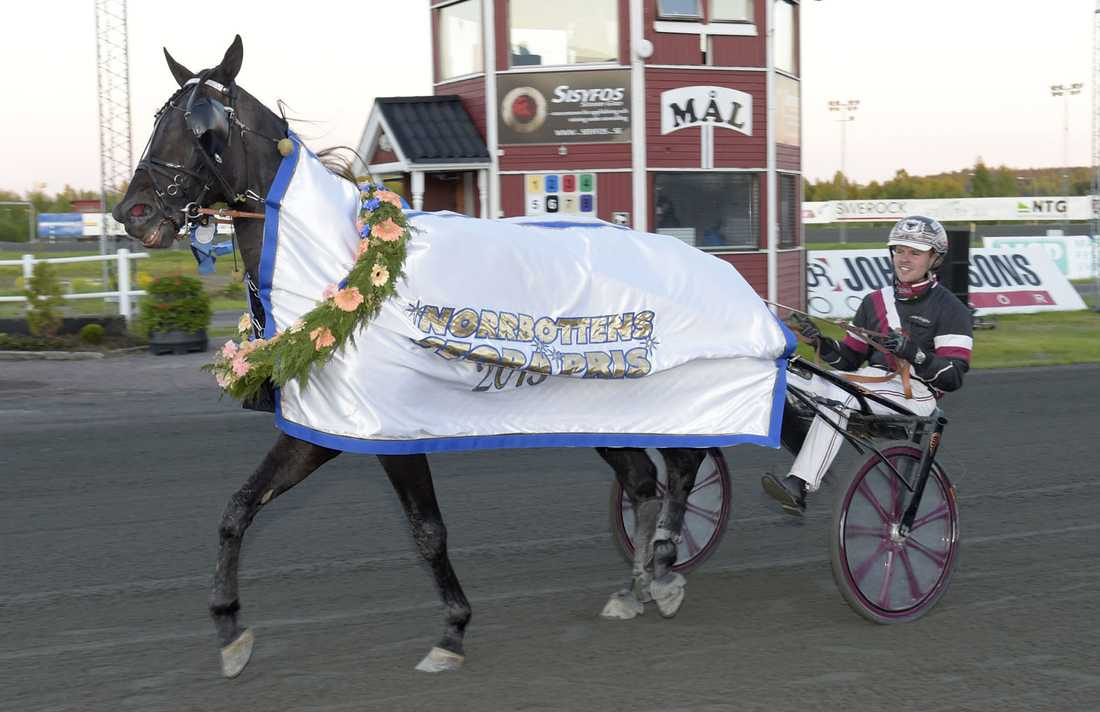 El Mago Pellini efter segern i Norrbottens Stora Pris 2015.
