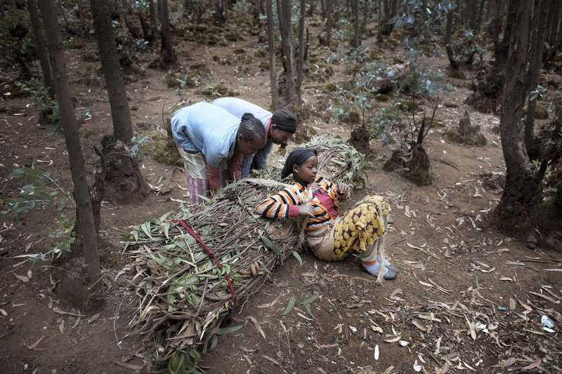 Serawit Kanu, 10, och Abeba Yilma, 9, måste putta på för att hon ska kunna resa sig. På egen hand klarar hon knappast att axla upp emot 70 kilo vedris.