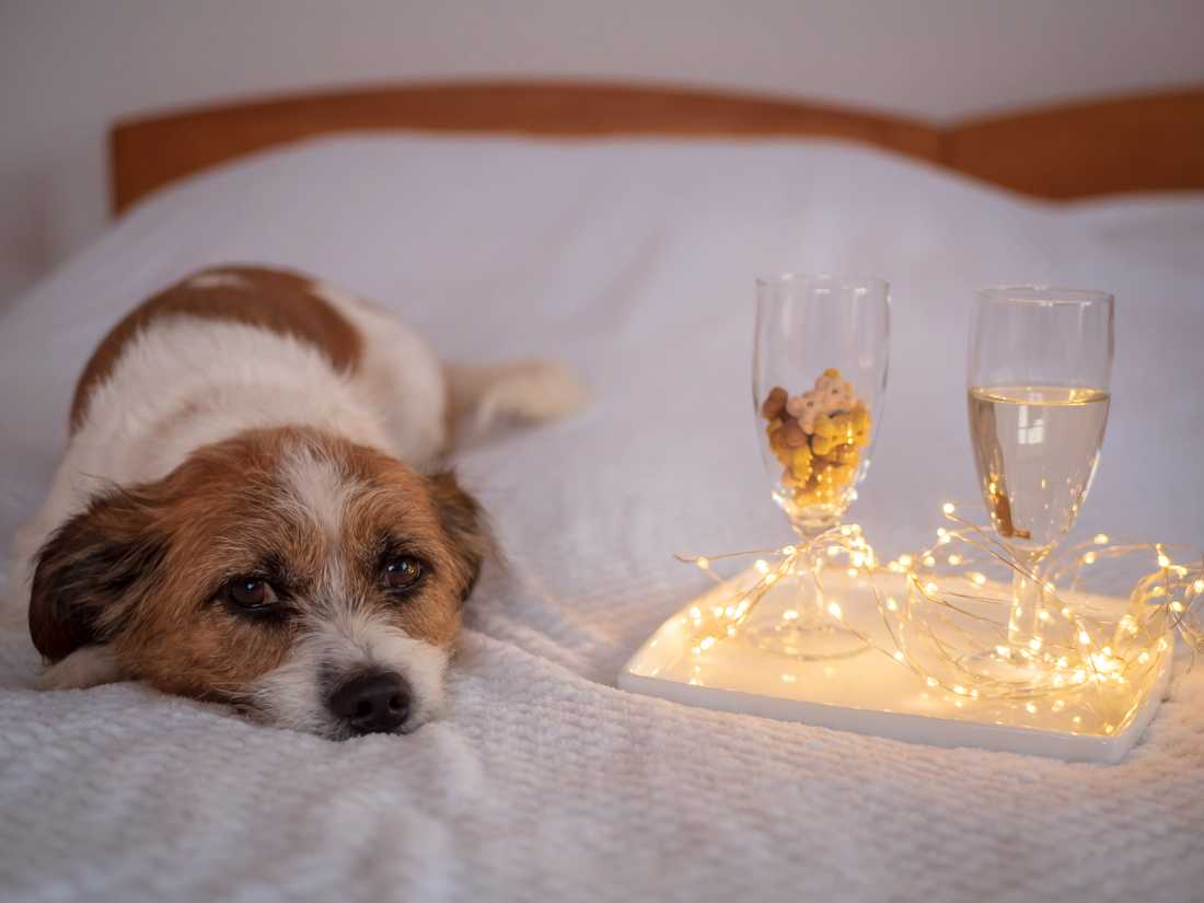På ett flygplatshotell får husdjuren en fristad under nyår.