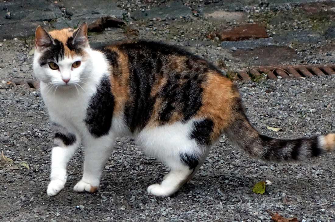 En katt har rymde ombord på en färja mellan Sverige och Tyskland, men nu har ägarna hittats. Genrebild.