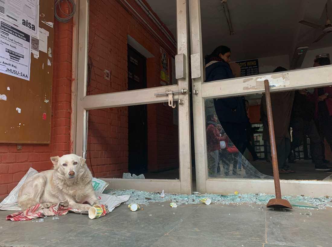 En hund ligger vid en sönderslagen entré efter att flera personer vandaliserade Jawaharlal Nehru University i Delhi.