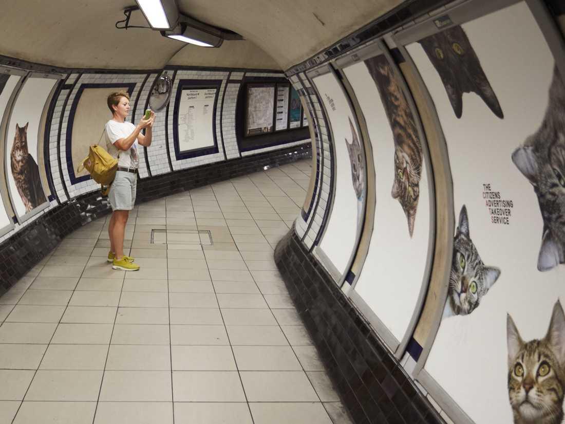 Tunnelbanestationen är nu fylld av 68 kattbilder istället för reklam.