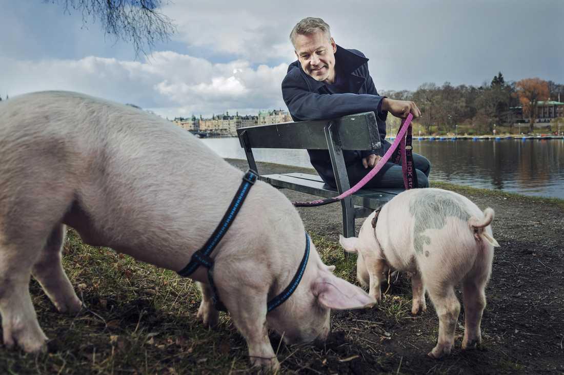 """Henrik Schyffert tillsammans med grisarna """"Vickan"""" och """"Madde""""."""