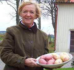 På gården i Bjälbo i Östergötland har Kari Pettersson skördat potatisarna för vintern.