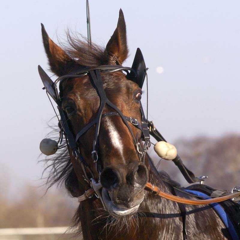 Lönshults Danne blev överraskande tvåa i storloppet Prix de Paris.