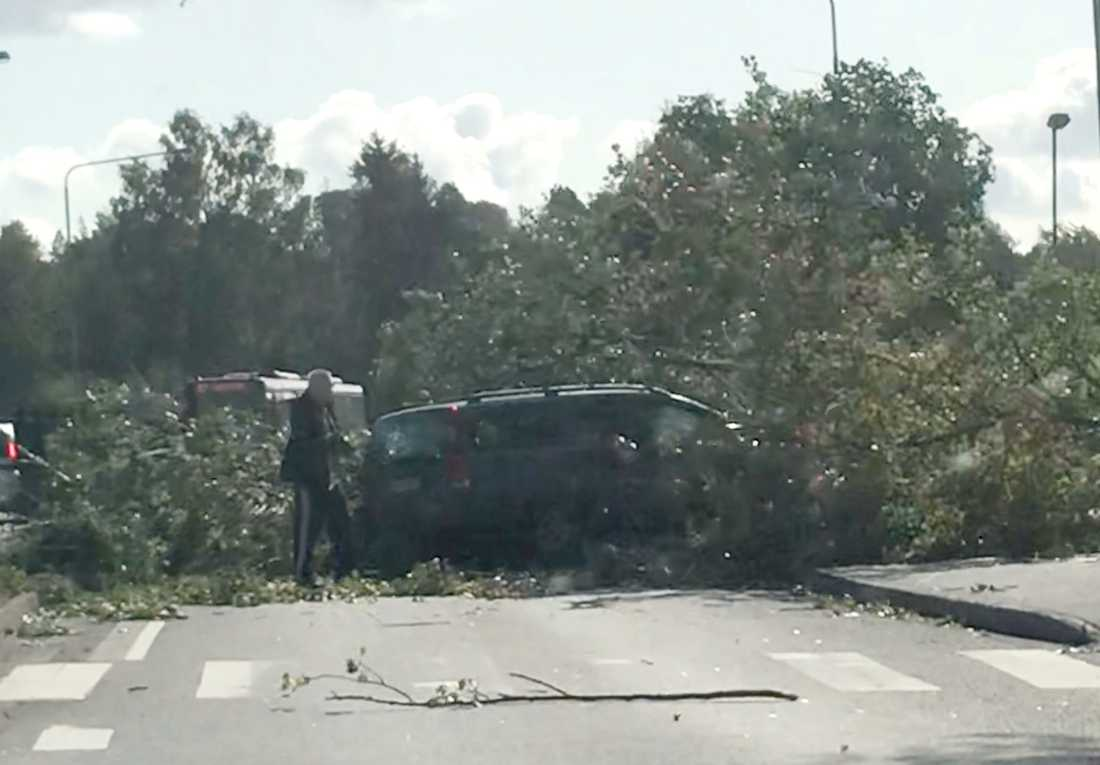 Ett träd har fallit över en bil på Vendelsö