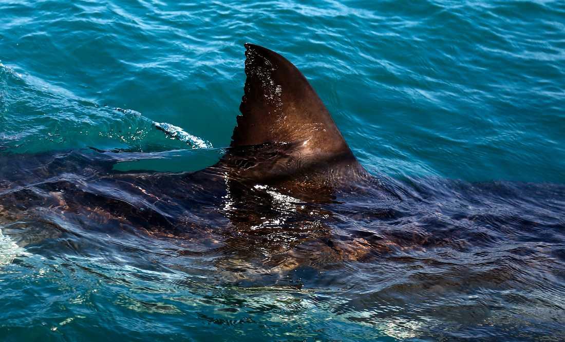 Kvinnan överlevde hajattacken. Arkivbild.
