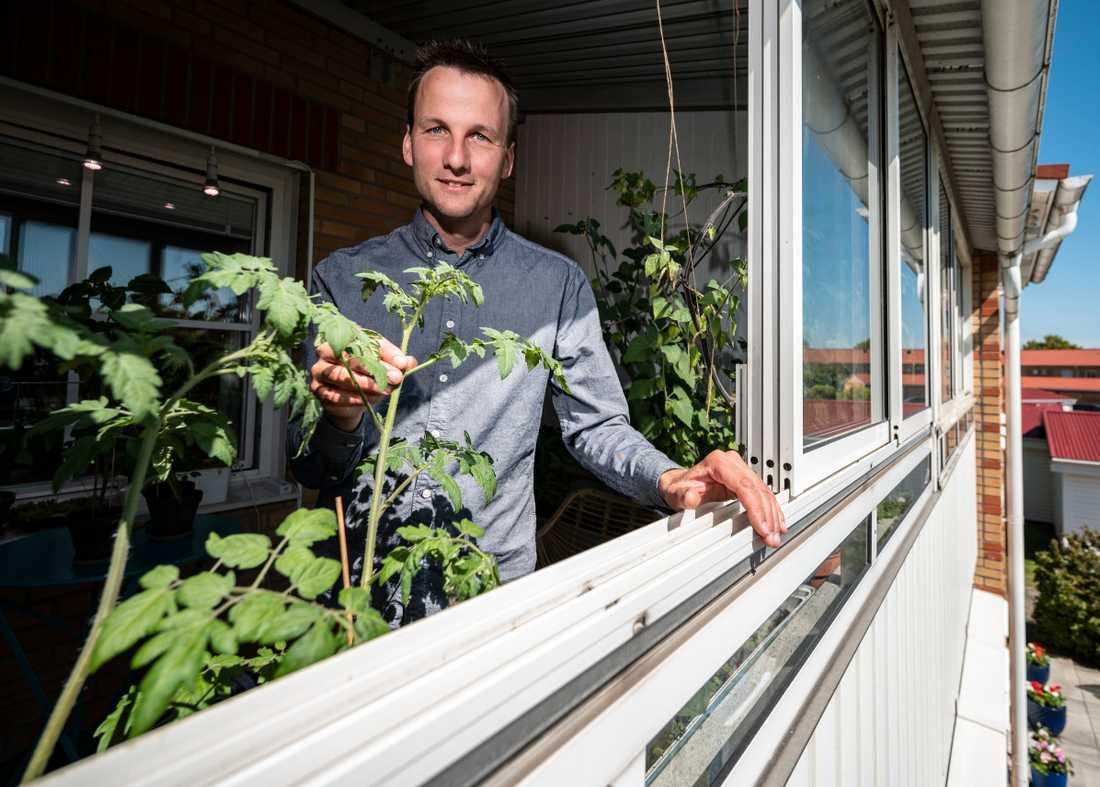"""Tomaterna växer högt på balkongen hos Niklas Hjelm från föreningen Hemmaodlat. Svenskarna rekordköper frön och växter som aldrig förr, och i coronatider siktar många på en sommar i trädgården. """"Tomater av olika sorter, de älskar värme"""", säger han."""