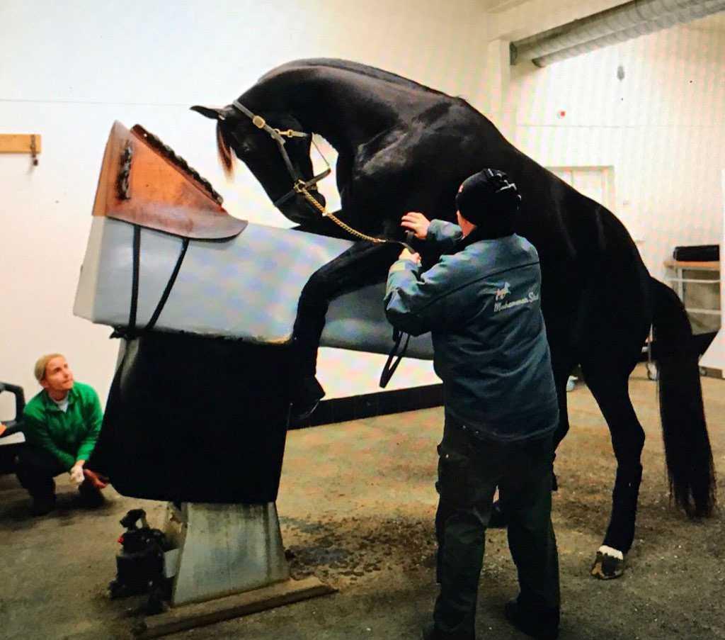 Nuncios framtid? Just nu provbetäcker stjärnhästen på Menhammar, samtidigt ska tränaren Stefan Melander till USA-stuteriet Hanover Shoe Farm och kolla läget. Avel eller Frankrike-satsning?