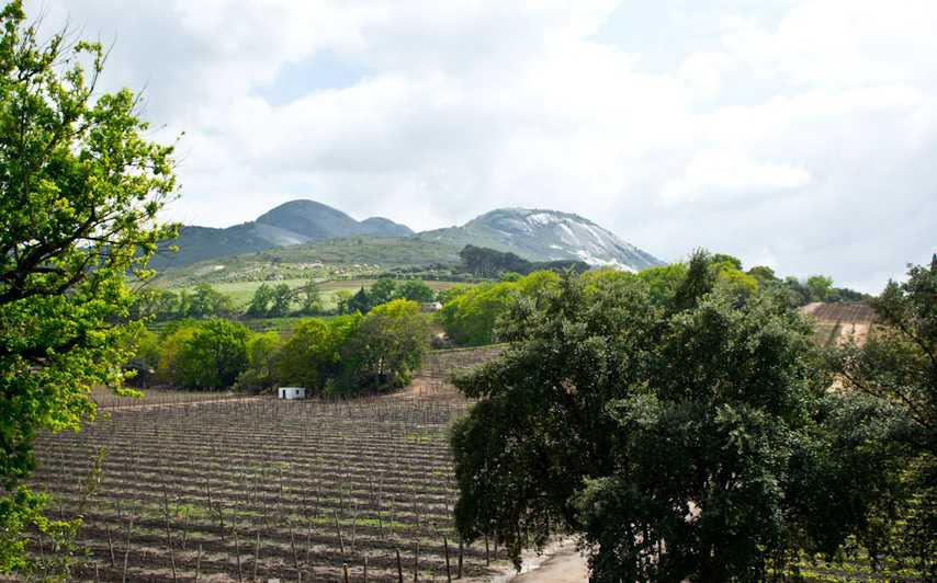 I Stellenbosch finns många vingårdar.