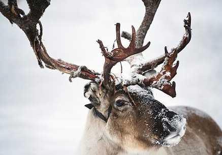 Norrland kan drabbas hårt av klimatförändringarna.