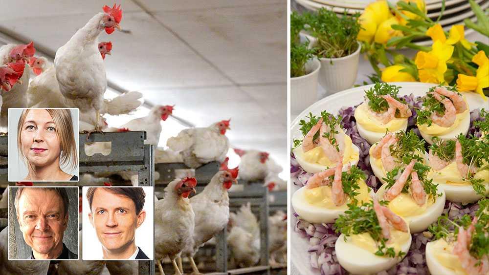 I äggindustrin kläcks kycklingarna i en maskin. I stället för tryggheten under mammas vingar åker de iväg på ett transportband, paketeras och skickas iväg till värpanläggningar, skriver Camilla Björkbom, Pär Friberg och David Stenholtz.