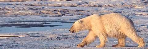 Viktig fråga Regeringen borde ha lyft fram miljöskyddet av Arktis inför EU-ordförandeskapet.