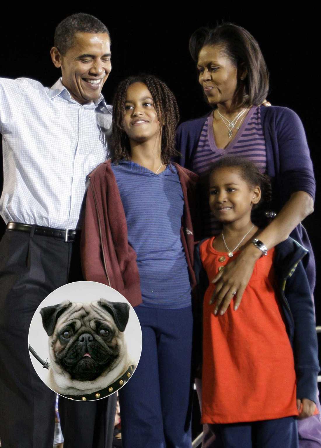 Kanske en mops? Det finns många små hundar som passar en barnfamilj, som Obamas, bra.