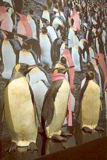 Ett av fem par bland kungspinvinerna i zoologiska trädgårdar är homosexuella. De bildar även samkönade par i det vilda.