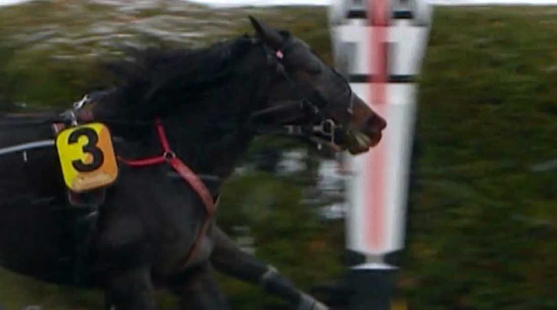 Med en mule tog Simon Zion hem tävlingen.