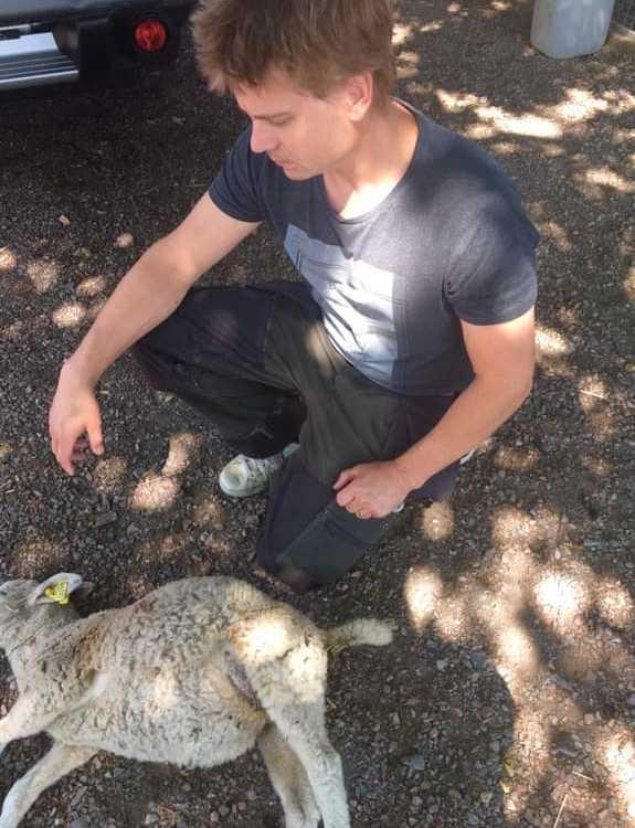 Christofers lamm hittades död.