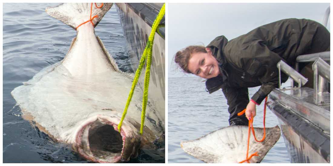 Erica drog upp den enorma rekordfisken.