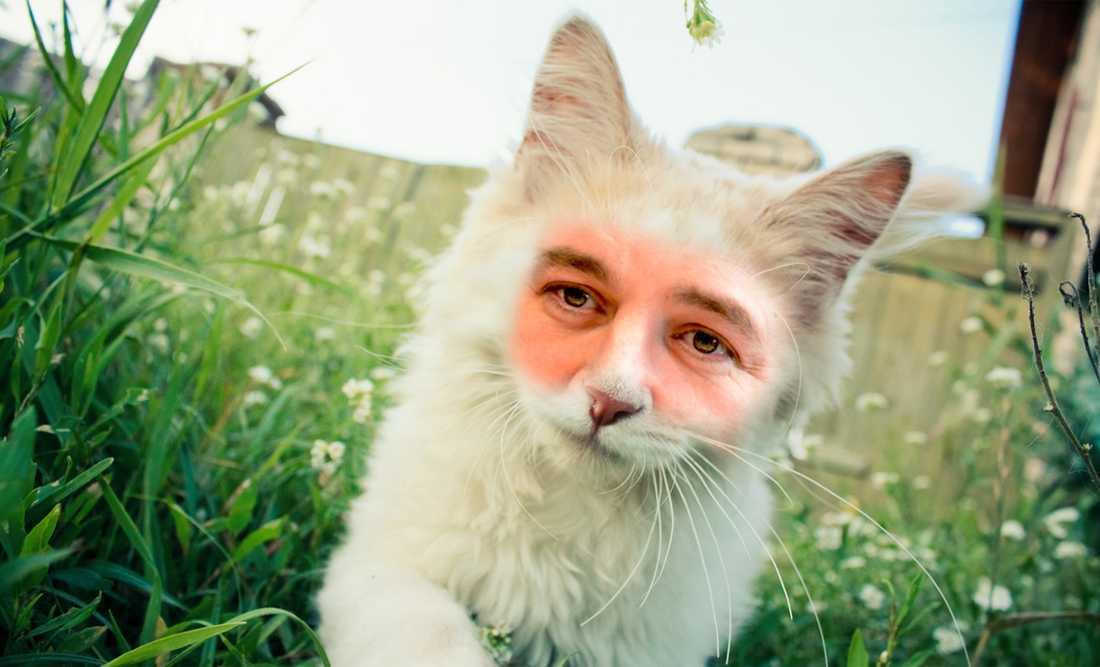 (M)JAO...  Det är dåligt med klös i alliansens arbetslinje. Reinfeldt liknar allt mer en nöjd och fet katt än en varg. OBS: Bilden är ett montage!