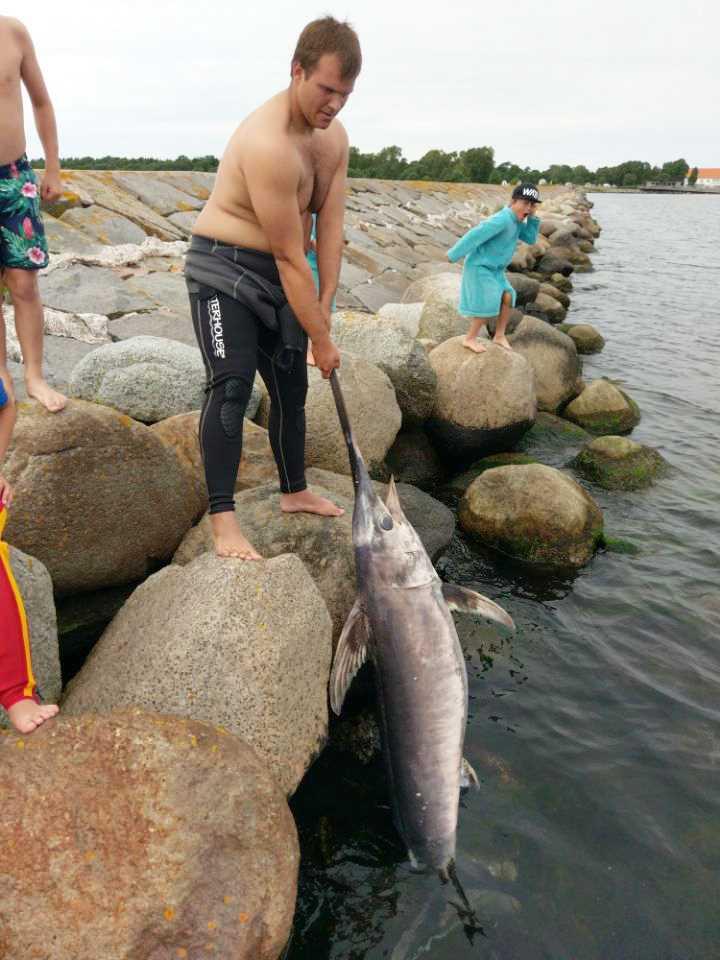Sylvester Sebastianson och den döda svärdfisken.