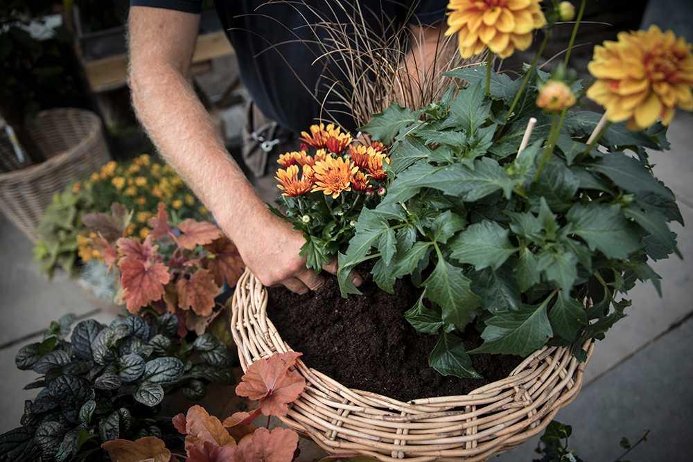 En läcker höstkruka sätter färg på trädgård och tillvaro.