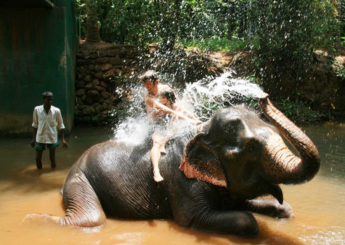 En elefanttur avslutas inte sällan med ett gemensamt bad. Blött värre, men superkul, tycker Febe och pappa Pål.