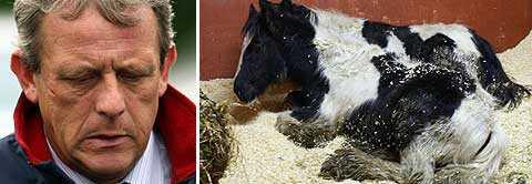 """Hästhandlaren James Gray, 45, förklarar de 32 kadavren på sin gård med att det är vanligt att hästar """"plötsligt dör"""". Foto: Scanpix"""