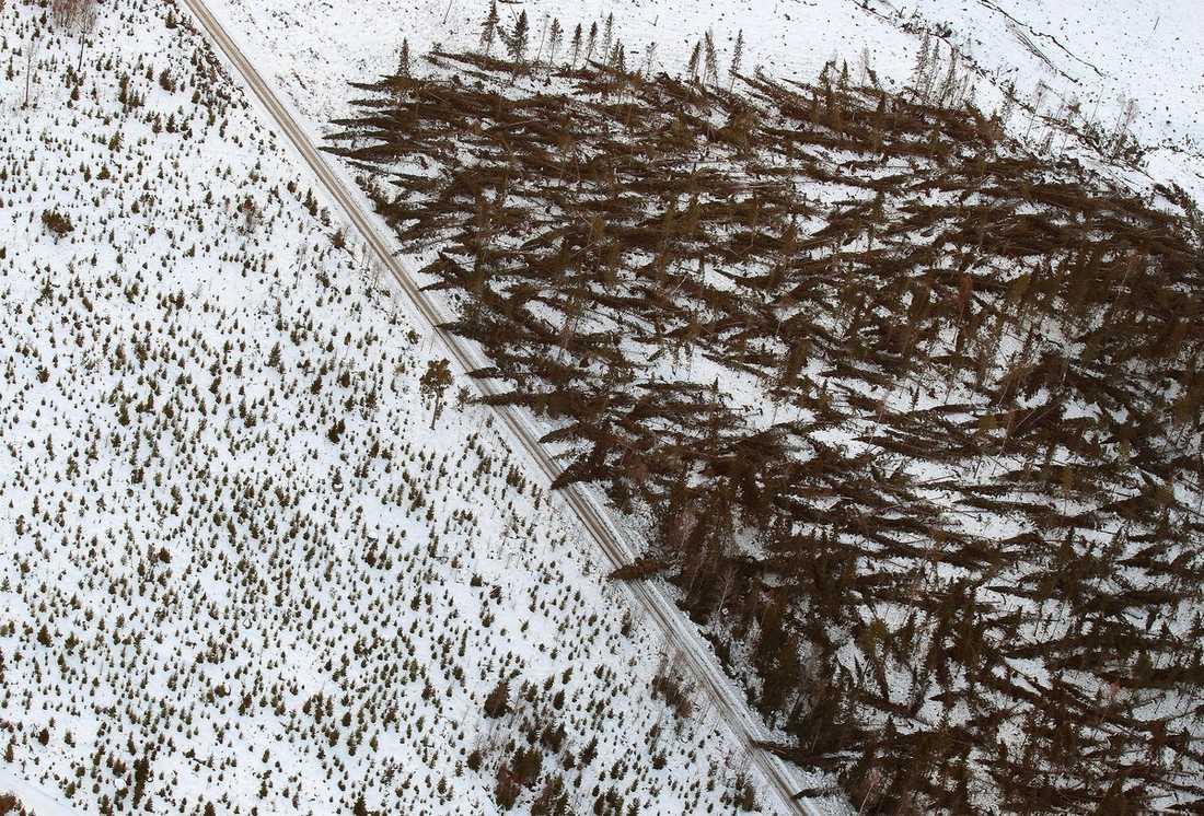 HAR SKÖVLAT SKOGEN  Aftonbladets flygbilder över Hassela i Gävleborgs län visar bara en liten del av den enorma förödelse som stormen Dagmar orsakat.
