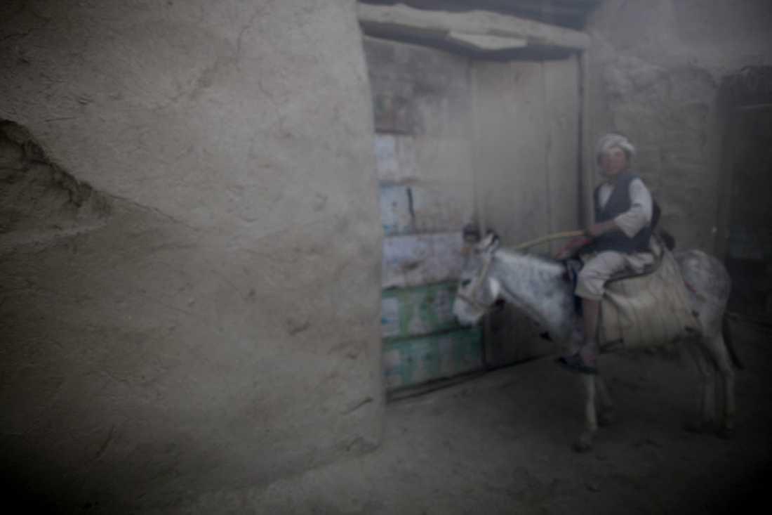 En pojke på en åsna i Alizayi.