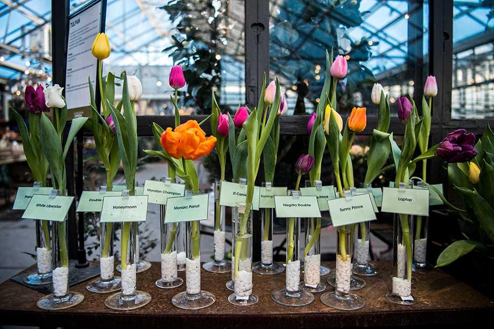Tulpaner finns i alla dess färger – och i många former.