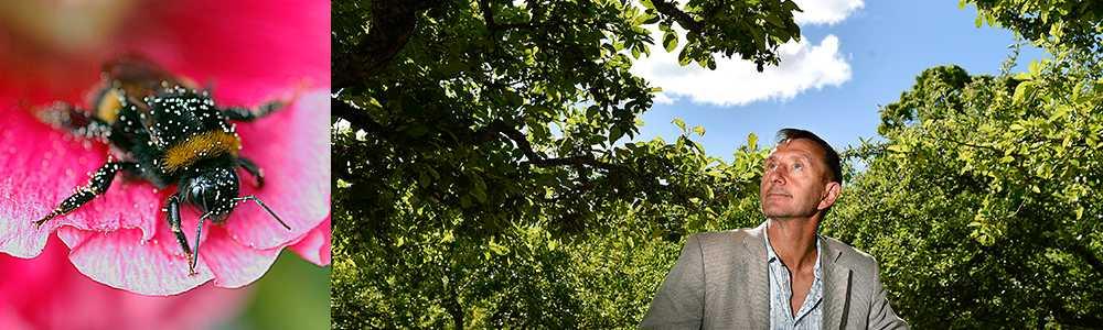Den brittiske biologiprofessorn Dave Goulson har skrivit en ny bok om humlor.