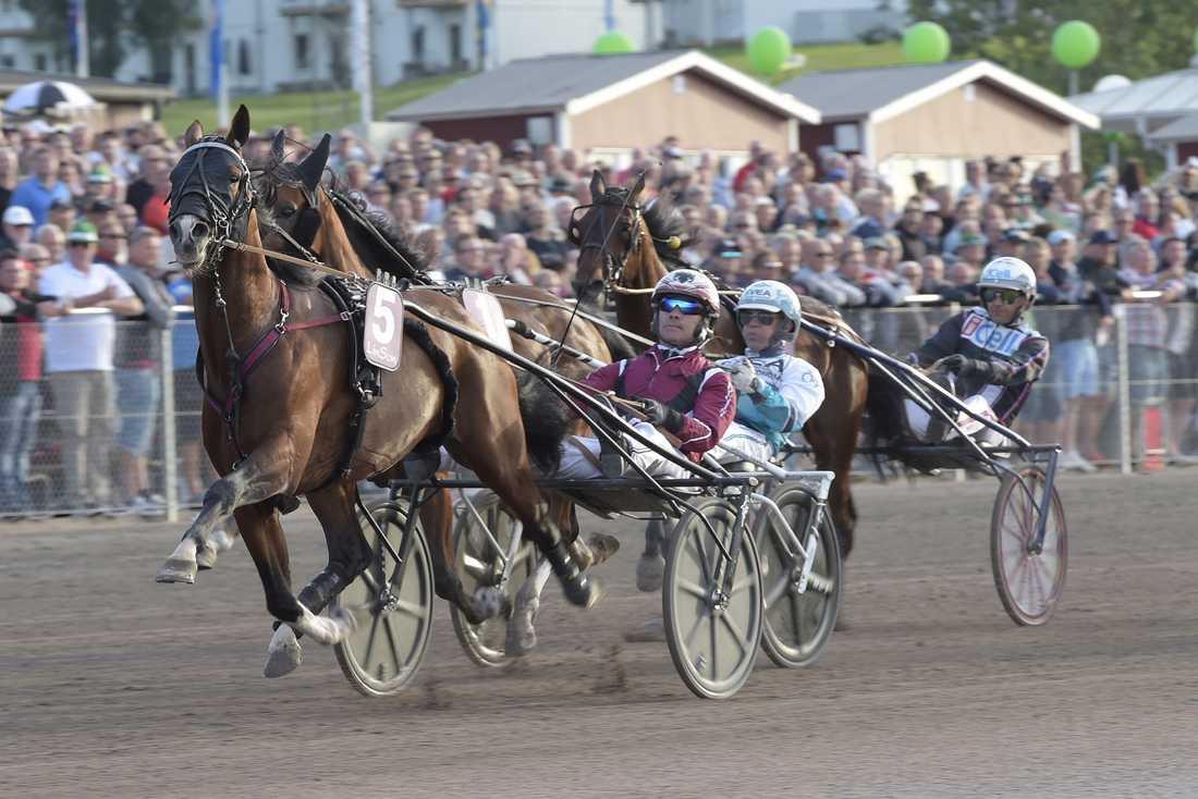 Rajesh Face blir favorit till segern i Svenskt Travderby på söndag.