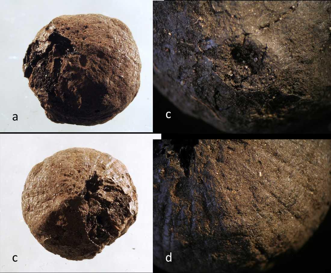 Löken från medeltiden som hittades vid öländska Sandby borg.