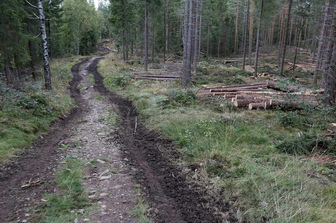 Forn- och kulturlämningar i landets skogar har klarat sig bättre senaste tiden. Arkivbild.