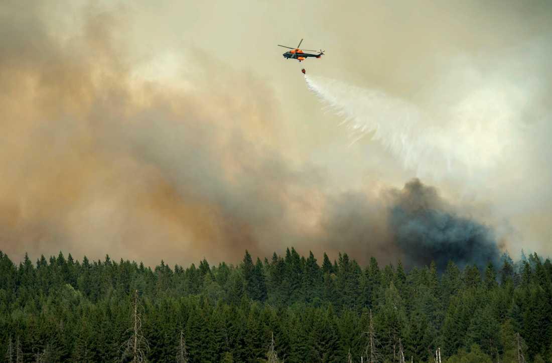 En helikopter vattenbombar skogsbranden i Västmanland, då 14000 hektar skog till ett värde av hundratals miljoner brann upp sommaren 2014. Arkivbild.