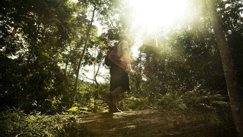 Guiden Zahari Harris visar vägen i den snåriga djungeln.