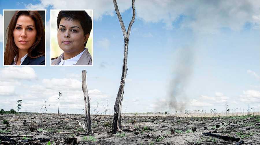 Hela 77 procent av det vi plockar ut från den svenska skogen blir till produkter som brinner upp. Alltså är inte Amazonas skogspolitik något unikt, skriver Lina Burnelius och Parul Sharma från Greenpeace.