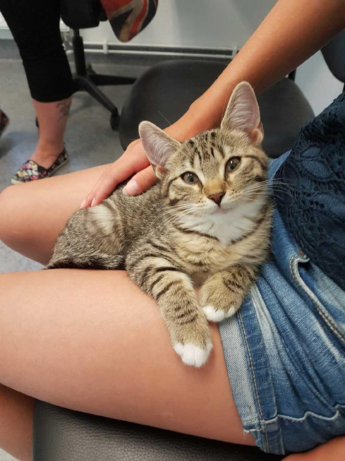 Det visade sig att kattungens familj tidigare hittats på samma plats.