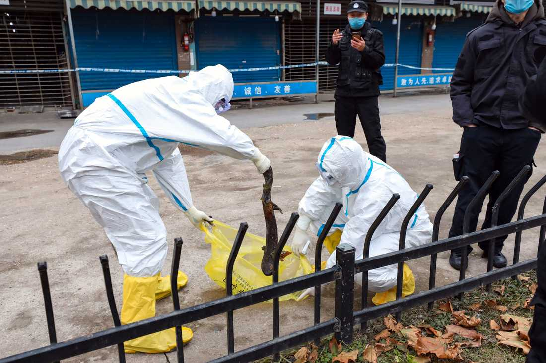 Coronavirusutbrottet i Wuhan i Kina spårades tidigt till marknaden Huanan, där vilda djur såldes som mat. Marknader som säljer levande och döda djur på det här sättet är en central del av vardagen i många städer i Asien. Arkivbild.