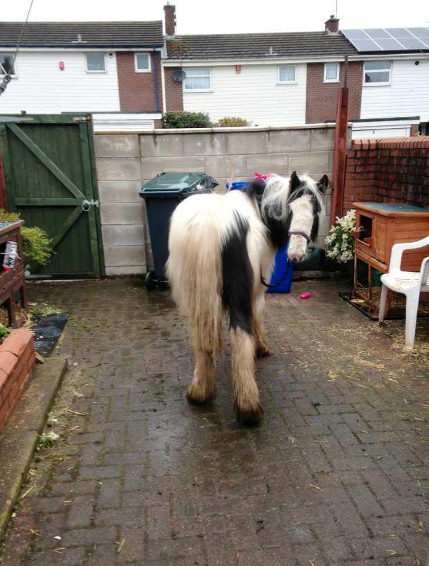 Nämlihen en häst som någon hade övergivit.